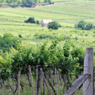 hon Farička – Staronový vrch